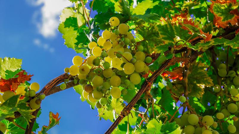 Guide du vins et vinification – chateaucaillivet.fr